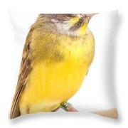Green Singing Finch Crithagra Mozambicus Throw Pillow