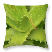 Green Succulent Throw Pillow