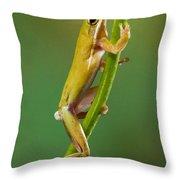 Green Tree Frog Climbing Throw Pillow
