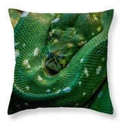 Green Tree Python Curled Throw Pillow