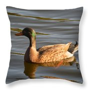 Green Winged Teal Throw Pillow