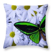 Green Wings In The Mums Throw Pillow