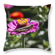 Greeting Grasshopper  Throw Pillow