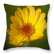 Greeting The Morning Sun Throw Pillow