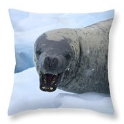 Greetings From Antarctica.. Throw Pillow