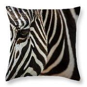 Grevy's Zebra 4 Throw Pillow