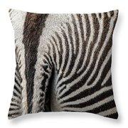 Grevy's Zebra 5 Throw Pillow