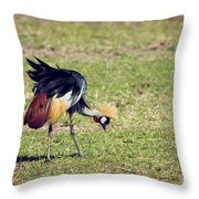 Grey Crowned Crane. The National Bird Of Uganda Throw Pillow