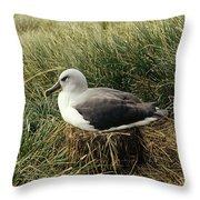 Grey-headed Albatross Nesting Chile Throw Pillow