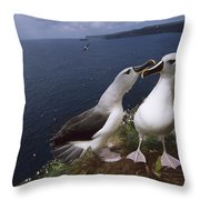 Grey-headed Albatrosses At Nest Site Throw Pillow