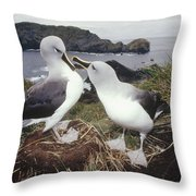 Grey-headed Albatrosses Courting Throw Pillow