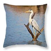 Grey Heron  Ardea Cinerea Throw Pillow