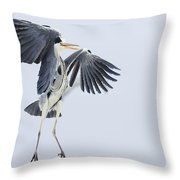 Grey Heron Landing Germany Throw Pillow