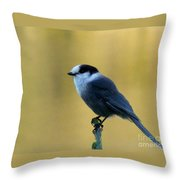 Grey Jay  Throw Pillow