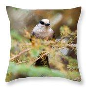 Grey Jay Perisoreus Canadensis Watching Perched Throw Pillow