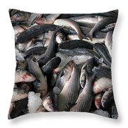 Grey Mullet Fish For Sale At A Fish Auction Throw Pillow