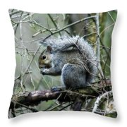 Grey Squirrel Throw Pillow