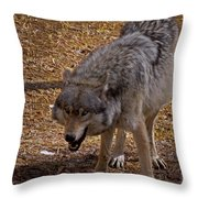 Grey Wolf   #2637-signed Throw Pillow