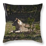 Grey Wolf   #3273-signed Throw Pillow