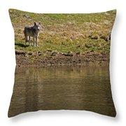 Grey Wolf   #4427 Throw Pillow