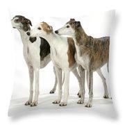 Greyhound Dogs Throw Pillow