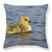 Greylag Goose Gosling Zeeland Throw Pillow