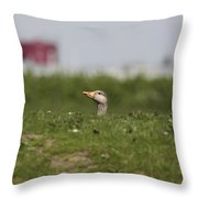 Greylag Goose Sticks Its Head Above The Dike Throw Pillow