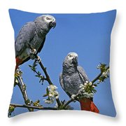 Gris Du Gabon Psittacus Erithacus Throw Pillow