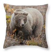 Grizzly Amongst Fall Foliage In Denali Throw Pillow