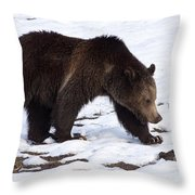 Grizzly Bear  #2463 Throw Pillow