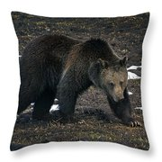 Grizzly Bear  #2510 Throw Pillow