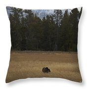 Grizzly Bear  #5245 Throw Pillow
