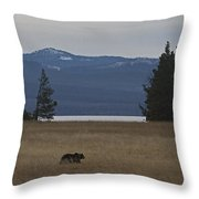Grizzly Bear  #5270 Throw Pillow