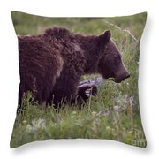 Grizzly Bear  #6192 Throw Pillow