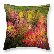Grizzly Bear Fireweed Throw Pillow by Tim Newton