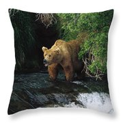 Grizzly Bear Fishing Brooks River Falls Throw Pillow