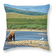 Grizzly Bear Stalking A Gull In The Moraine River In Katmai National Preserve-alaska Throw Pillow