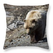 Grizzly By The Road Throw Pillow
