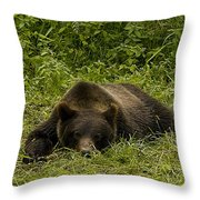 Grizzly Cub  #0863 Throw Pillow