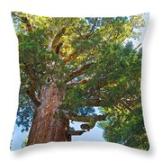 Grizzly Giant Sequoia Top In Mariposa Grove In Yosemite National Park-california    Throw Pillow