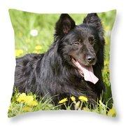 Groenendael Dog Throw Pillow