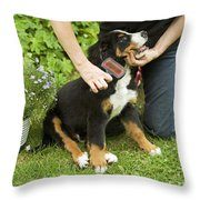 Grooming Bernese Mountain Puppy Throw Pillow