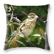Grosbeak Throw Pillow