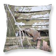 Ground Hog Day Throw Pillow