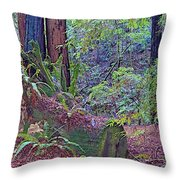 Ground Level Landscape In Armstrong Redwoods State Preserve Near Guerneville-ca Throw Pillow