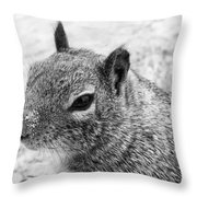 Ground Squirrel With Sandy Nose Throw Pillow