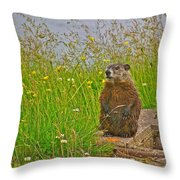Groundhog At Point Amour In Labrador Throw Pillow