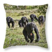 group of Common Chimpanzees running Throw Pillow