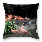 Group Of Flamingos And Lone Heron In Water Throw Pillow
