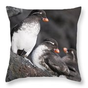 Group Of Parakeet Auklets, St. Paul Throw Pillow